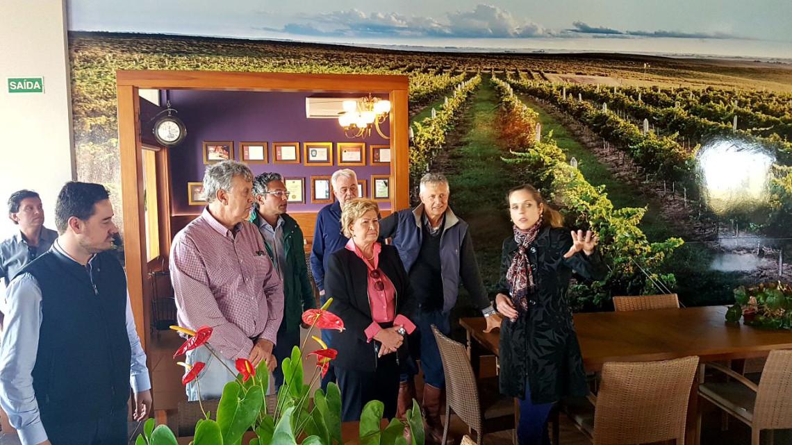 Produção de vinho e curso de enologia mudam perfil econômico da região da Campanha do RS