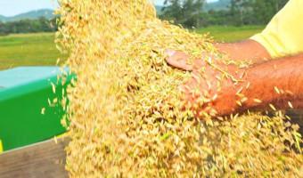 Ana Amélia pede ampliação de convênio que beneficia produtores de arroz do RS