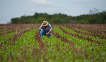 CRA fará audiência pública interativa sobre Seguro Rural