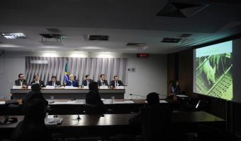 Senadores cobram medidas urgentes em apoio a suinocultores do Sul do país