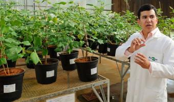 Impactos das pesquisas acadêmicas no setor agropecuário serão debatidos na CRA